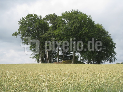 Roggenfeld auf dem Lande/Dänemark