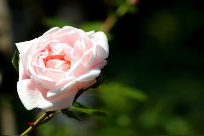 Blüten 377
