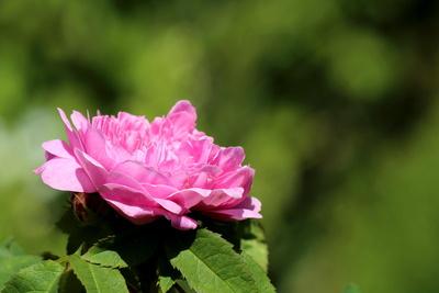 Blüten 378