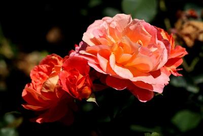 Blüten 380