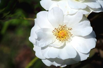 Blüten 381