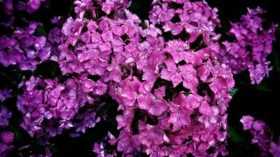 Blüten im Regen
