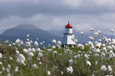 Mini-Leuchtturm hinter Wollgras