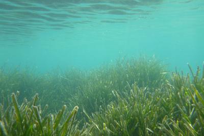 Seegraslandschaft