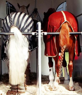 Pferde Ansichten