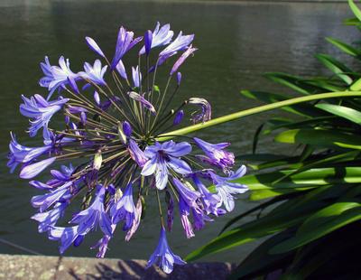 Blütenpracht am Donauufer 02