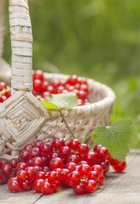 Rote Johannisbeeren Korb