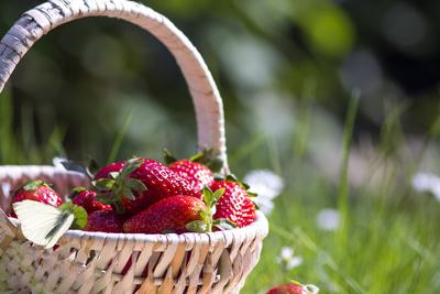 Erdbeeren Korb