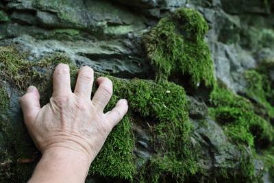 Hand auf Moos