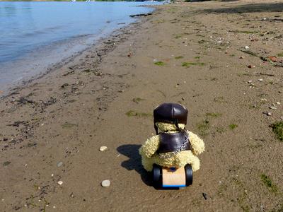 Teddy am Strand