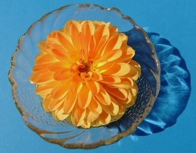 Blüte in Kristallschale