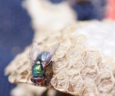 Fliege No. 1