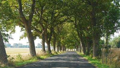 Landstraße im Schatten