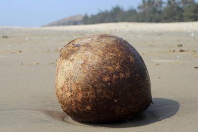 Kokosnuss 2
