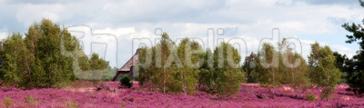 Panorama einer Heidelandschaft mit einem Schafstall