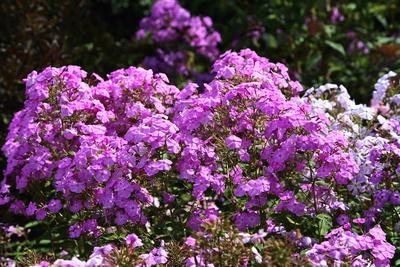 Blüten 383