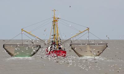 Krabbenfischer bei der Arbeit