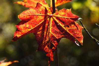 Herbst steht vor der Tür
