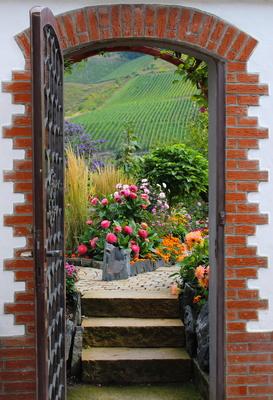 Ausblick auf die Weinberge