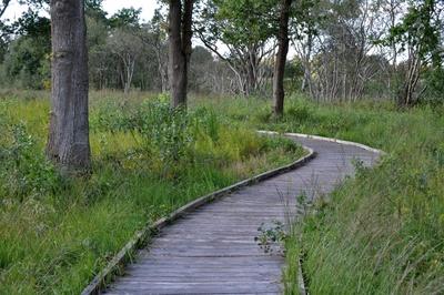 Holzbohlenweg am Ewigen Meer