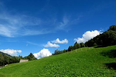 Alpweiden im Berner Oberland