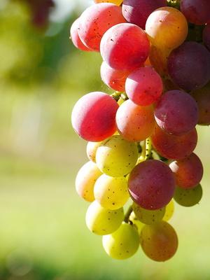 Pfälzer Wein . . .