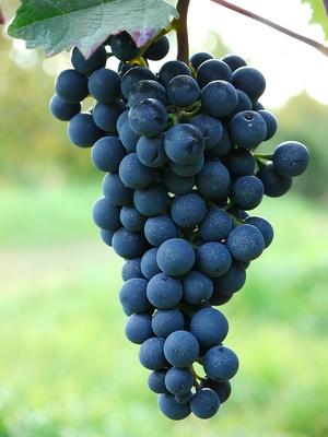 Pfälzer Rotwein . . .