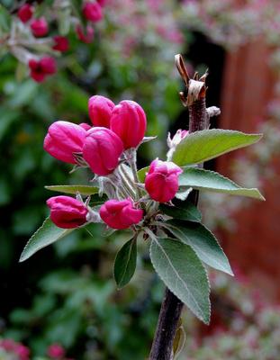 Strauchblüten