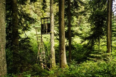 Jäger-Hochsitz im Nadelwald 2