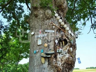 Baum der Erkentnis