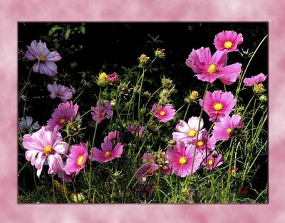 Blumen-Stilleben