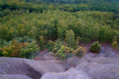 Wald im Spätsommer (Tilt/Shift-Aufnahme) von einer Berghalde aufgenommen