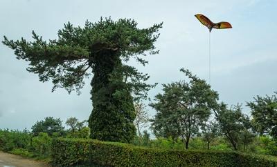 Drachen am T-Baum