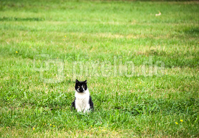 Katzen-Model auf Nachbars Wiese ;-)