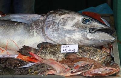 Fisch ist gesund...