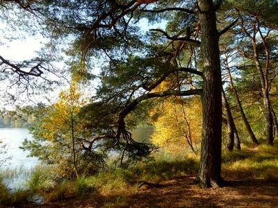 Spätsommer am Waldsee