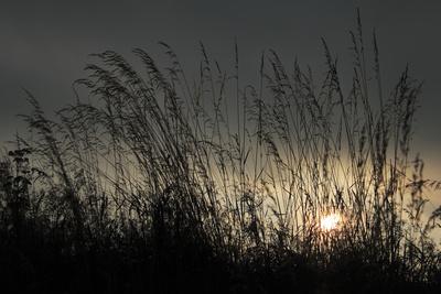 Sonnenuntergang in den Gräsern