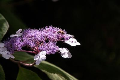 Honigschlecken