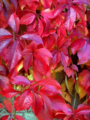 autumn - fall -herbst