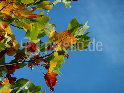 autumn - fall - herbst