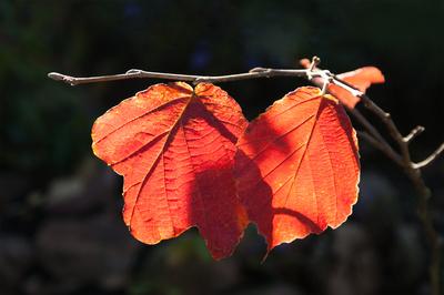 Es wird Herbst