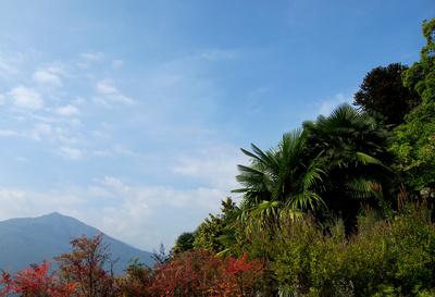 Herbst mit Palmen