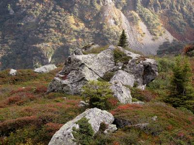 Berg-Herbst am Susten