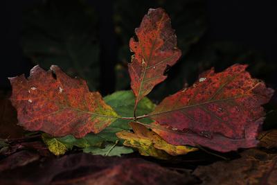 Herbstsinfonie