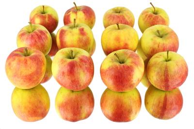 Apfel 44