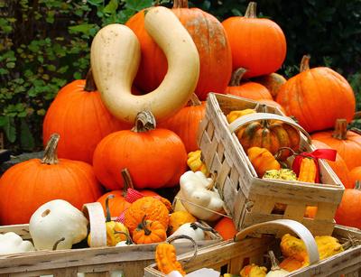 Herbstzeit = Kürbiszeit 01