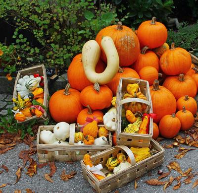 Herbstzeit = Kürbiszeit 03