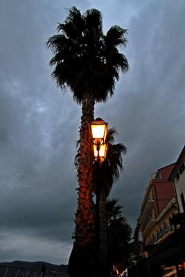 Palme im Laternenlicht