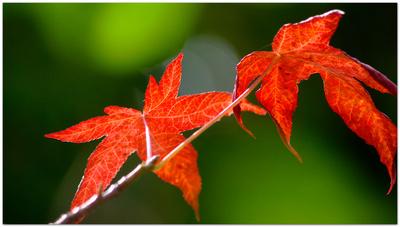 Herbstliche Reflexionen