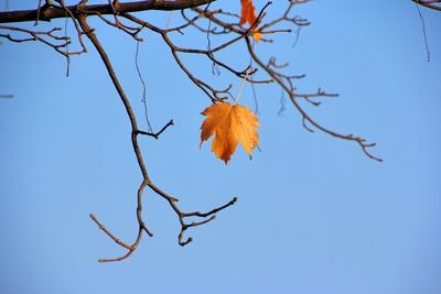 Ein letztes Herbstbatt